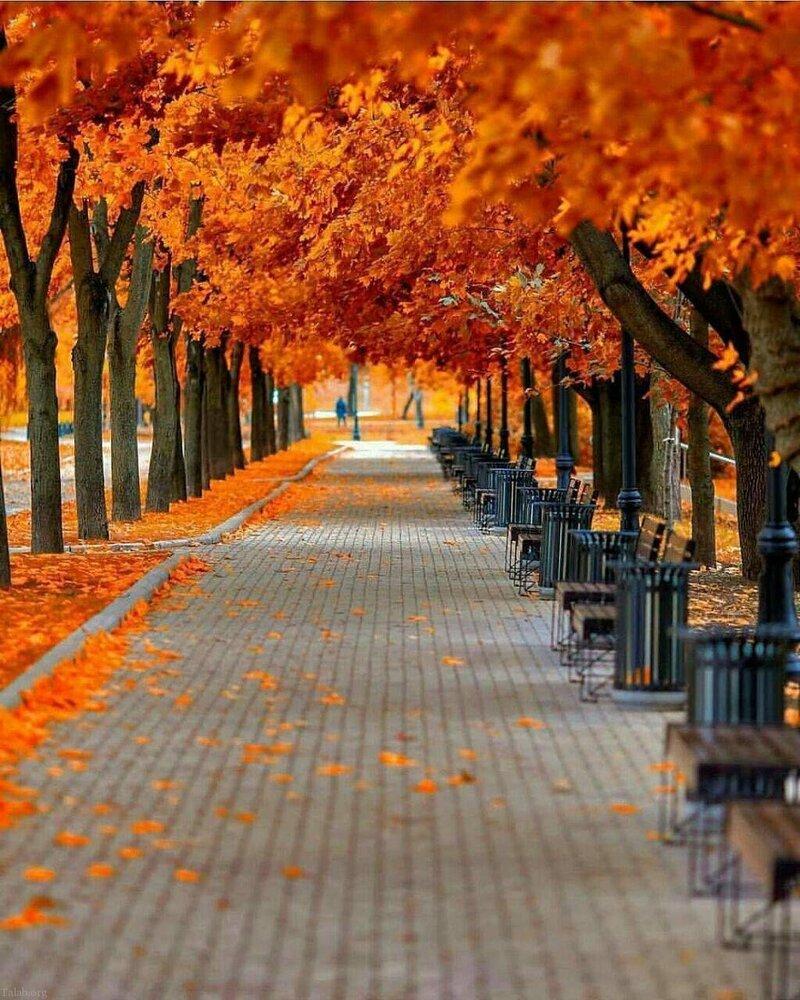 پاییز FALL AUTUMN