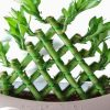 بامبو،از یک گیاه گلخانه ای تزئینی تا ماده اولیه تهیه پوشاک